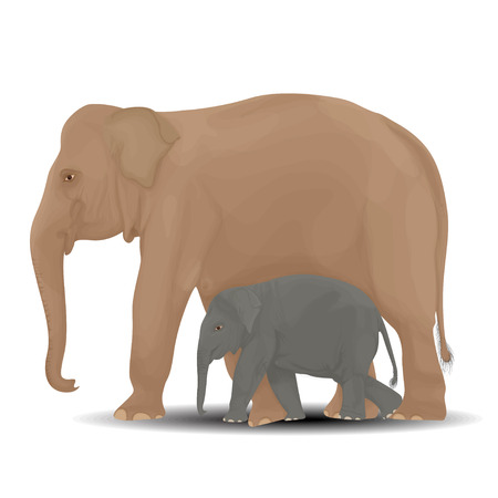 full length herbivore: Mother and baby elephant vector illustration.