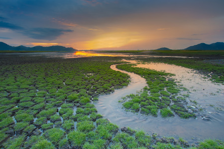 climate: Small water way over green grass cracked land during sunset Stock Photo