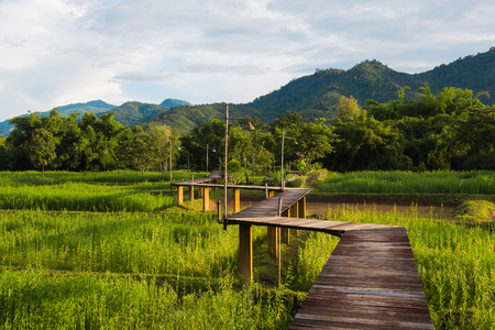 Wood path along rice field and through the mountain, natural landscape background Stock Photo