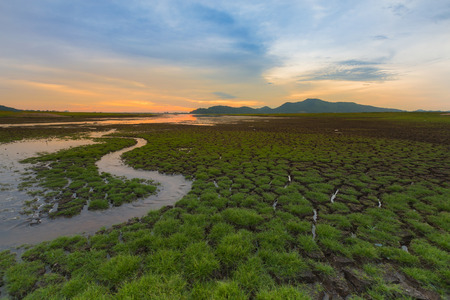 Water way over early little grass with sunset background, natural landscape
