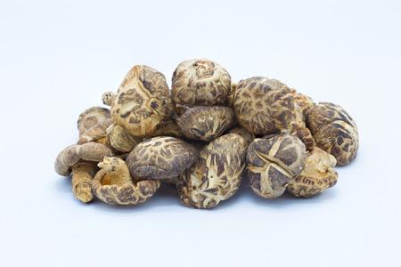 Dry brown mushroom on white background