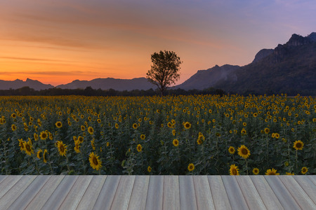 Opening wooden floor, beauty sunset sky over sunflower field with mountain background