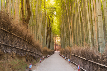 dazzling: Walking way leading to bamboo forest, Kyoto Japan