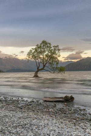 Wanaka alone tree on Wanaka Lake South Island New Zeland, natural landscape background