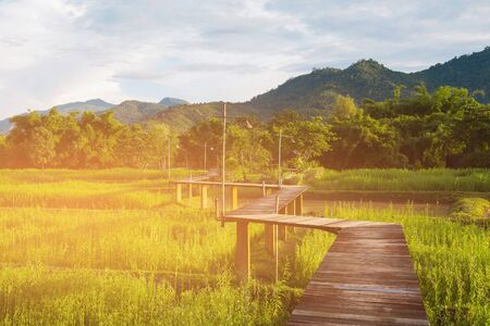 Wooden pathway zigzag shape over rice field and mountain background