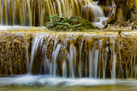 Little plant over tropical stream waterfall, natural landscape background Imagens
