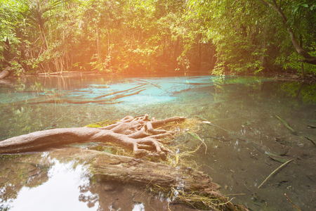 Water lake in tropical deep forest in national park of Thailand