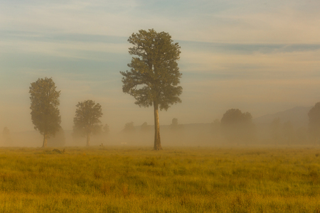 Alone tree on meadow morning seen, natural landscape background Фото со стока