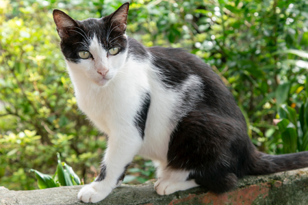 Black and White cat, young pretty pet