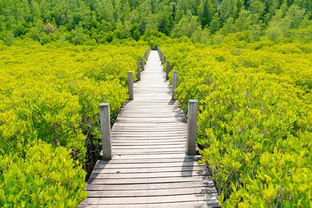 Wooden walking path over green mangrove, natural landscape background