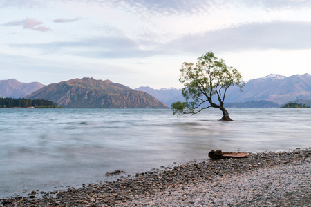 Stand alone Wanaka tree in water lake, New Zealand natural landscape background