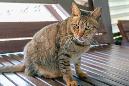 Looking at cute female cat standing on wooden floor Standard-Bild - 140020032
