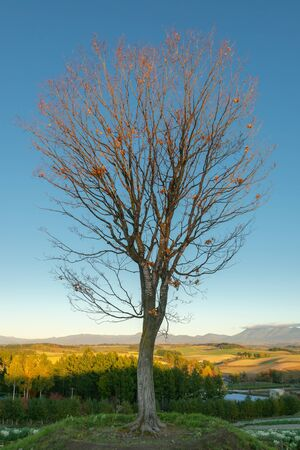 Falling alone treee with clear blue sky and mountain background Standard-Bild - 140083059