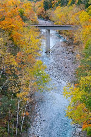 Colour changing tree over small river during autumn season Hokiado Japan natural landscape background