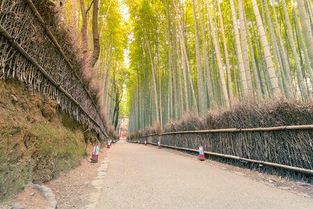 Bamboo Jungel walking path, Arashiyama Japan natural landscape