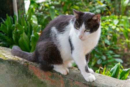 Black and White slim cat sitting on the wall