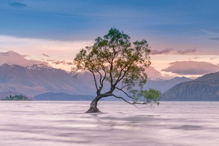 Lonely tree at wanaka lake with mountain background, New Zealand natural landscape background