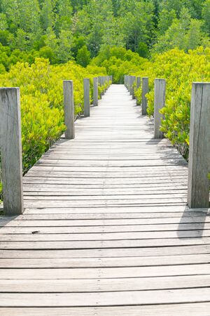 Wooden walkway leading to mangroves forest, natural landscape background Archivio Fotografico
