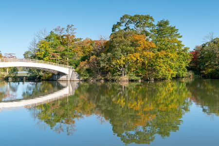 Natural public park with reflection water lake and clear blue sky background Archivio Fotografico