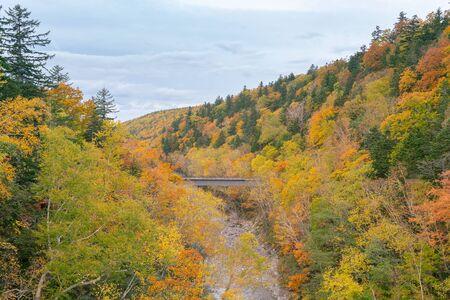 Autumn fallen season beauty of natural in Hokkaido Japan Archivio Fotografico