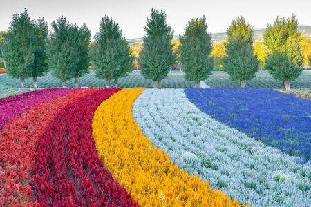 Flower colour rainbow tone gardening during autumn season Japan landscape