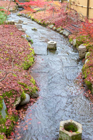 Small water way with fallen maple leaves, natural landscape background