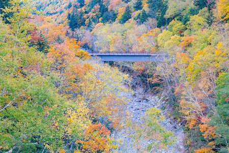 Fallen tree on mountain nautral landscape in autumn season