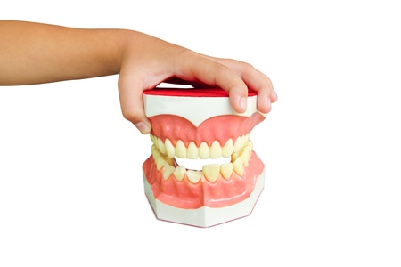 Denture Stock Photo - 11404295