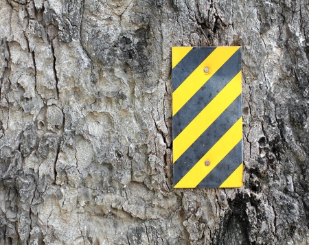Yellow- black strip on the surface of the tree. Stock Photo