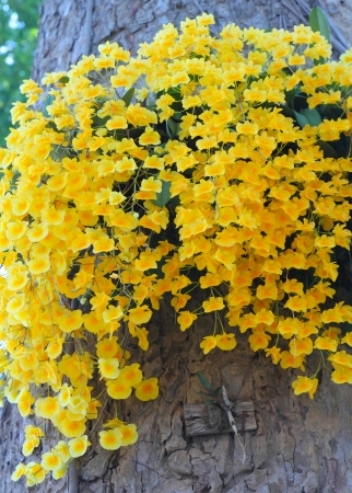 Beautiful branch yellow orchid photo