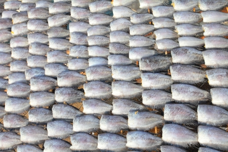 Rows of dry fish  photo