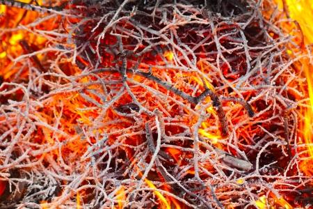 Bonfire background photo
