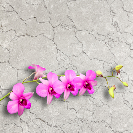 Orchid flower on the white marble background  photo