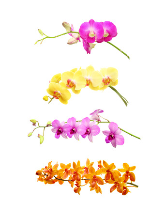 collection orchid flower on white background. photo