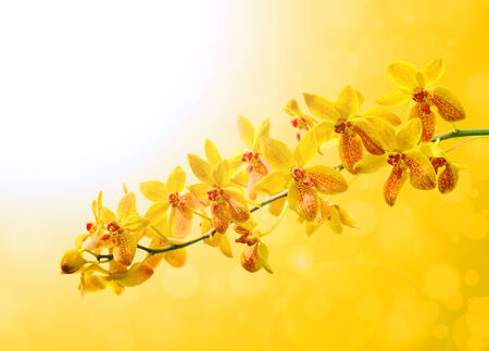 Yellow orchid on colorful yellow background photo