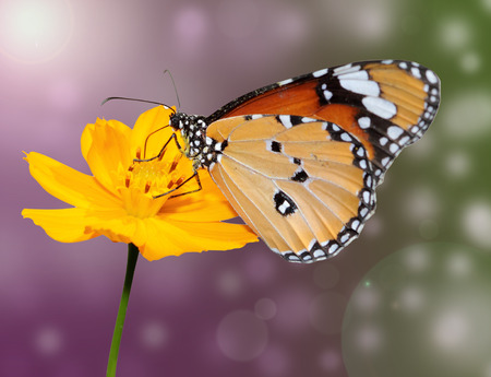 flower with a butterfly on the coloured background photo