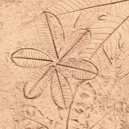 history background: marks of leaf on the concrete