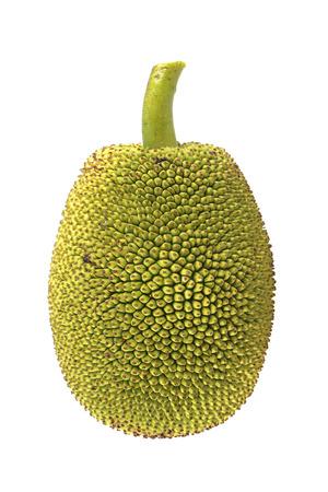 Young jackfruit isolated. 版權商用圖片