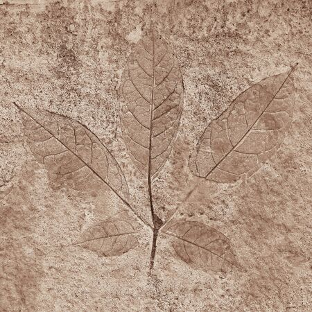 marks of leaves on the concrete photo
