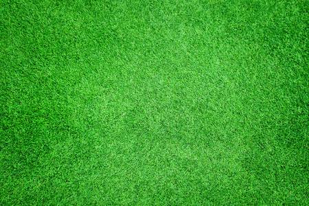 Beautiful green grass texture