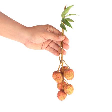 lichi: Fresh lychees hold by hand white background
