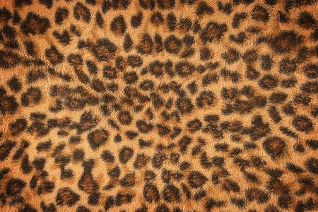 leopard: fabric pattern leopard pattern for background and texture