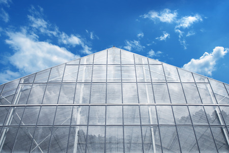 in the greenhouse: Greenhouse Against reflective light  Blue Sky