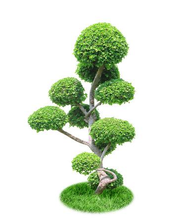 bonsai tree: bonsai tree isolated on a white background