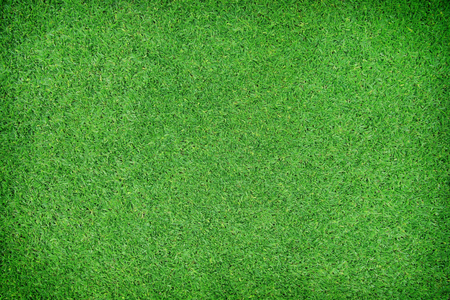 Green grass natural background. Top view Stock Photo