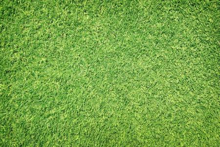 Grass field  Green grass background Stock Photo