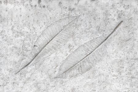 fossilized: marks of leaves on the concrete