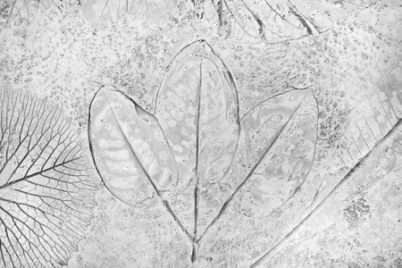 fossilized: marks of leaves on the gray concrete background