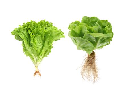 Set van verse groene groenten geïsoleerd op een witte achtergrond