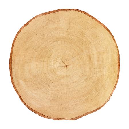 hornbeam: Tree cut birch isolated on white background